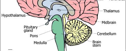 faq.brain